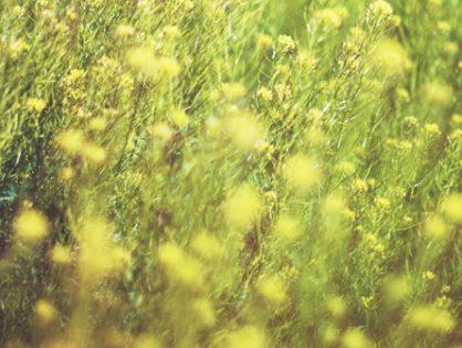 Alergias estacionales. Cómo tratarlas con medicina natural