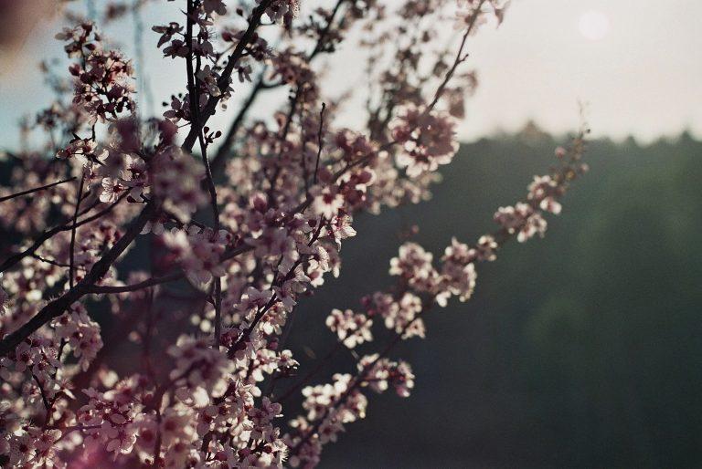 La Primavera y la Depuración Hepática